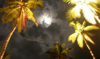 Moon palm